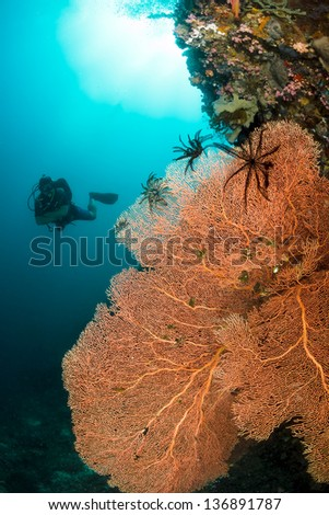 A diver swims near a large sea fan on a deep murky undersea wall - stock photo