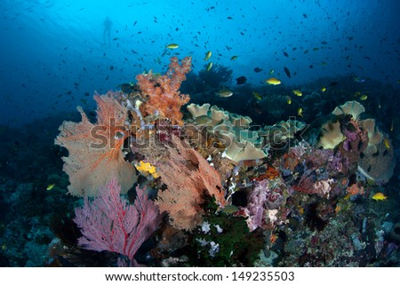 A diverse array of gorgonians, corals and colorful fishes thrive on a reef slope in the Solomon Islands.  This area is found within the Coral Triangle and is high biological diversity. - stock photo