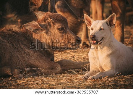 A dog and a calf - stock photo