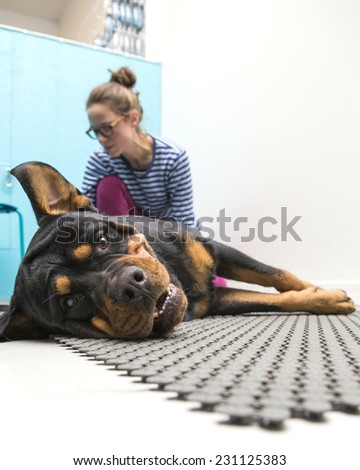 A dog chiropractic at work. - stock photo