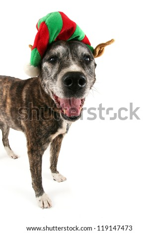 a dog dressed up for chistmas - stock photo