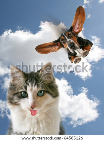 a dog flying towards a little kitten - stock photo