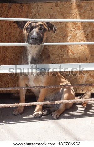 a dog in a cage - stock photo