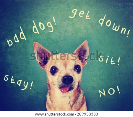 a dog in front of a chalkboard with commands written on it toned with a retro vintage instagram filter  - stock photo