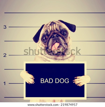 a dog in front of a convict poster getting a mug shot taken toned with a retro vintage instagram filter effect - stock photo