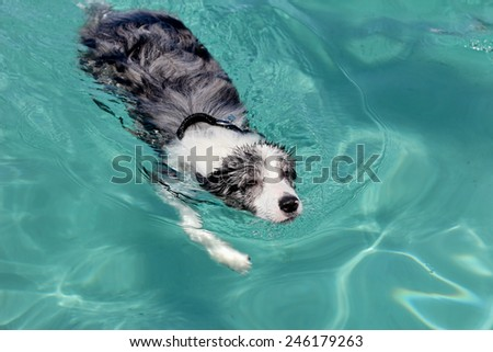 A dog is swimming in a blue sea - stock photo