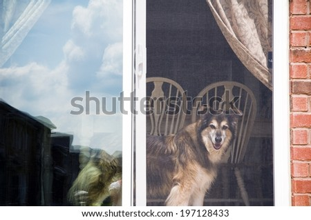 A dog looking out of a screen door with a table and chairs behind it. - stock photo