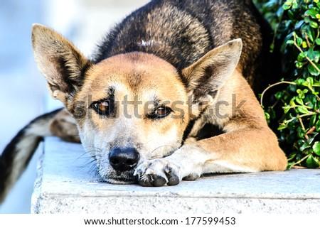 a dog on the roadside at WAT SOTHORN WARARAM  WORRAWIHARN TEMPLE - stock photo