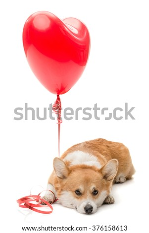 A dog pressing a red balloon to the floor with his paw - stock photo