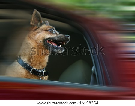 a dog riding in a car - stock photo