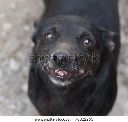 a dog, sniffing the camera - stock photo