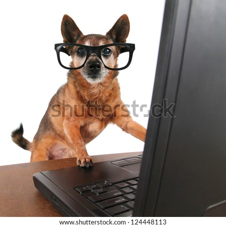 a dog surfing the internet - stock photo