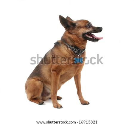 a dog that is panting on a white background - stock photo