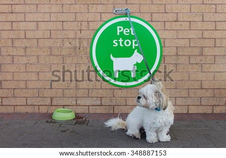 A dog waiting outside superstore - stock photo