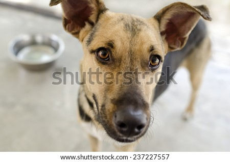 A dog with a food bowl in the background eagerly awaits his meal. - stock photo