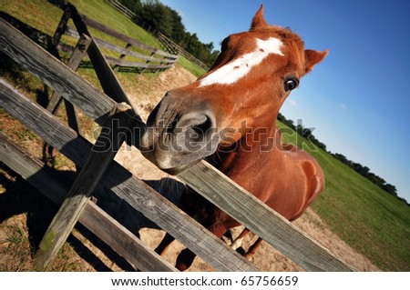 A domestic horse (Equus ferus) in Mill Creek Home of the Retirement Horse Farm - stock photo