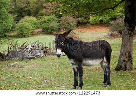 A donkey walking in the countryside - stock photo