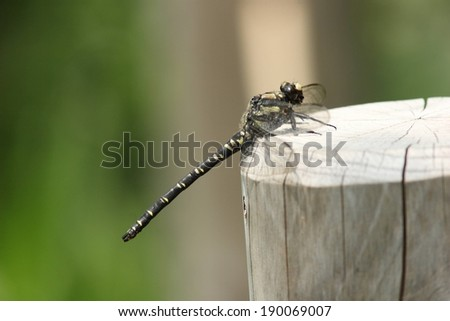 A dragonfly is resting on a wooden post. - stock photo