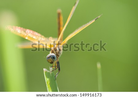 A dragonfly on a straw. - stock photo