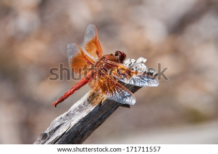 A dragonfly sits on a branch in the woods - stock photo