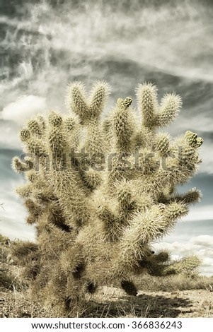A dramatic image of the Superstition desert in Arizona shows the rugged detail of a dry wilderness with a sharp cholla cactus and beautifully textured sky - stock photo