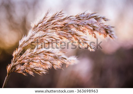 A dried up close-up thistle in the winter months - stock photo