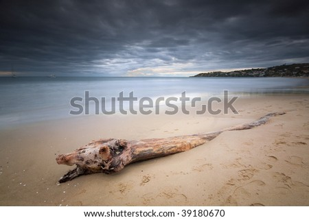 A driftwood on the cold winter sea shore shaped like a big snake - stock photo