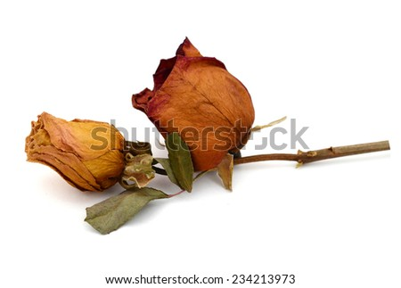 A dry rose in gift  - stock photo