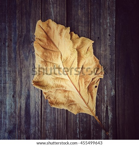 A Dry Teak Leaf Texture Dead Leaf background Nature Degign. - stock photo