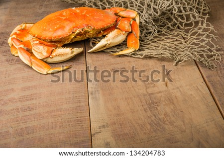 A Dungeness crab ready to be cooked - stock photo