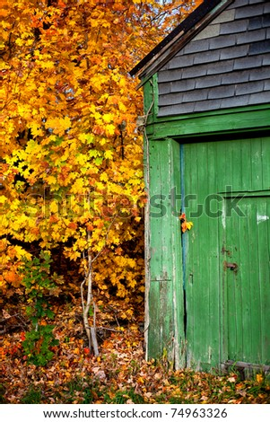 A faded green shed is surrounded by beautiful golden colored fall foliage in Massachusetts. - stock photo