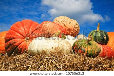 A fall display of colorful pumpkins in a farm - stock photo
