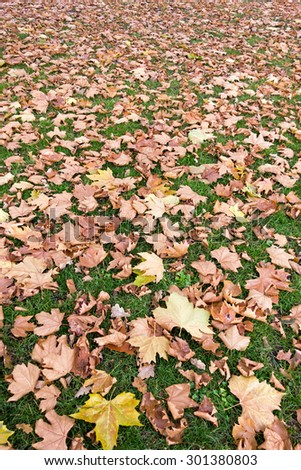 A fall themed natural background with yellow leaves on green grass - stock photo