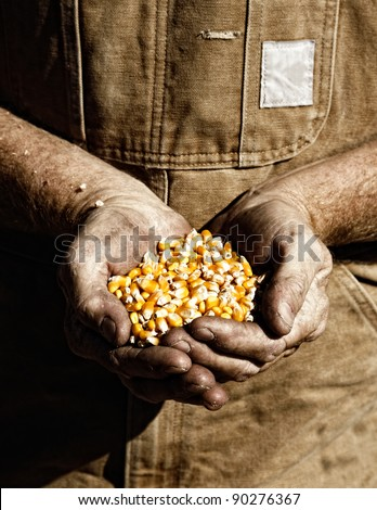 A farmer holds seed corn in his calloused hands (sepia tint added). - stock photo