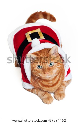 A fat orange Tabby cat lying down and wearing a red and white Santa suit - stock photo
