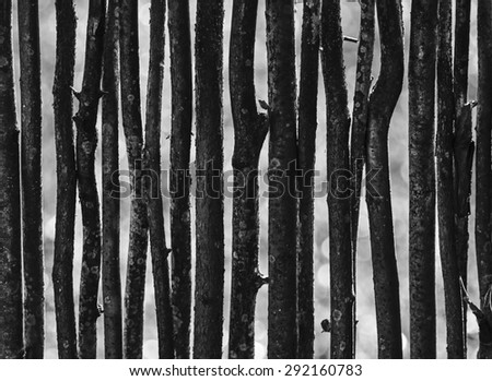 A fence made of thin rods backlit (black and white) - stock photo