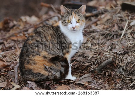 A Feral Cat Searching Through a Leaf Pile for Prey - stock photo