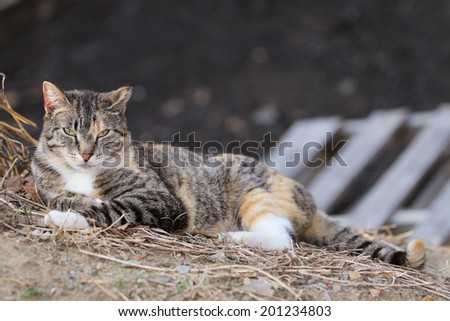 A Feral Cat Sleeping Outside In The Sunlight - stock photo