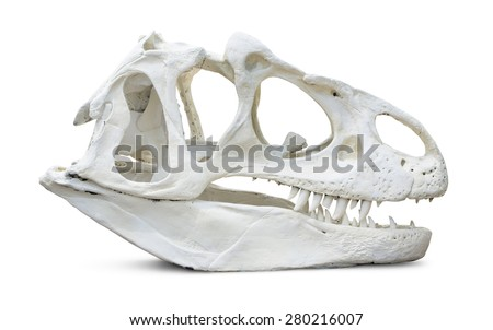 A fictitious tyrannosaurus rex skull isolated on a white background. - stock photo