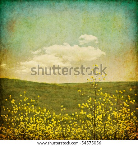 A field of black mustard plants with an aged, vintage look. - stock photo