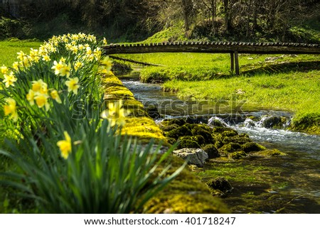 A field of daffodils in front of a romantic bridge over a river. Daffodils and wooden bridge on water - stock photo