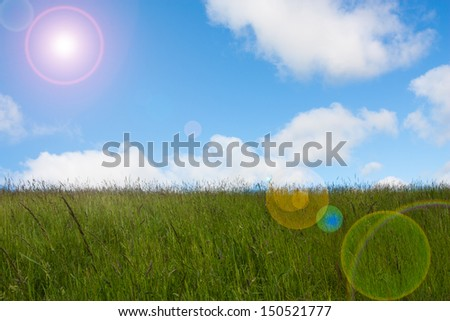 A field of meadow grass in summer time on a bring sunny day - stock photo