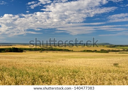 A field of ripe grain on the canadian prairie - stock photo