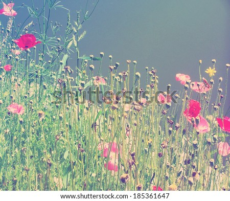 a field of wildflowers done with a colorful filter  - stock photo