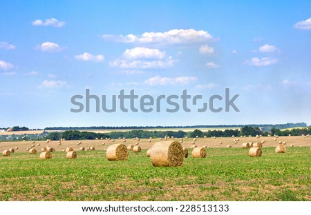 A field with straw bales peas after harvest. - stock photo