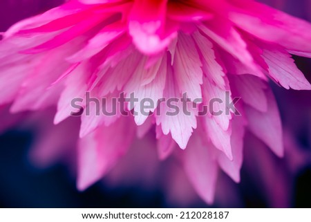 A filtered macro detail of a pink bloom head - stock photo