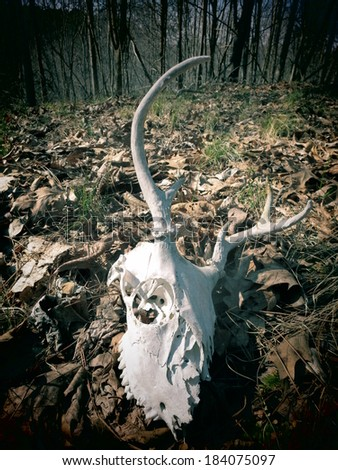A filtered view of a skeleton deer skull on a forest floor. - stock photo