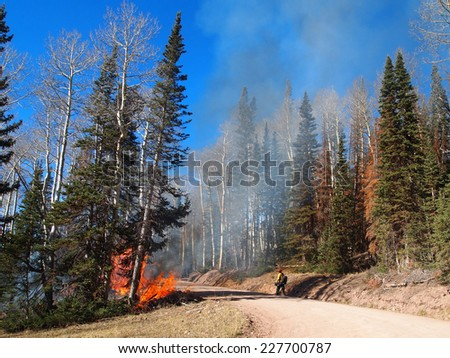 A fire fighter approaches a wildfire along a road in the forest. - stock photo