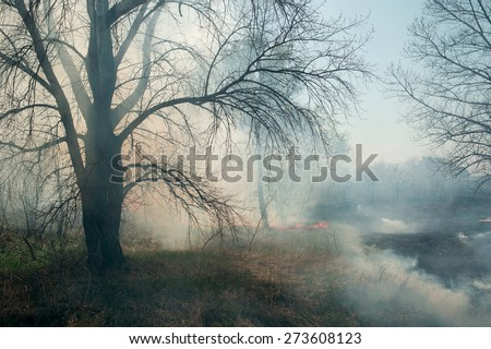 a fire in the forest plantation near residential buildings - stock photo