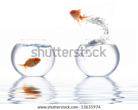 A fish leaping out of the water - stock photo